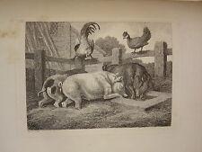 SAMUEL HOWITT 1765-1822 GRAVURE ANGLAISE ANIMAL COCHON COQ POULE FERME 1810