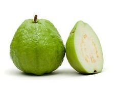 White Flesh Guava / Psidium guajava, Diabetic Controlling Fruit 20 seeds pack