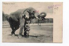 ELEPHANTS eléphant avec un homme sur ses défenses