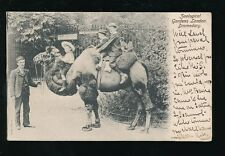London Zoological Gardens Animals DROMEDARY camel ride 1904 PPC