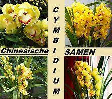 20x Rare Chinois Cymbidium Graines Plant Jardin Plantes D'intérieur Neu #222