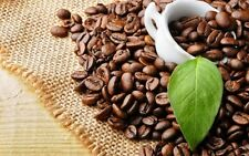 100+ Seeds Coffee Bean Tree Plant Seeds Tropical House Plant Very Nice Good