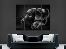 CUTE DOG BLACK LABRADOR  GIANT   WALL POSTER  PICTURE PRINT LARGE HUGE