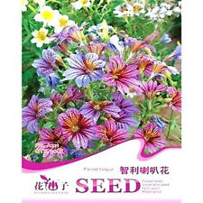 FD1662 Chile Morning Glory Seed Petunia Colorful Garden Flower ~1 Pack 30 Seed a