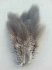 Fly tying / Native crafts / art - Guineafowl blue-grey flank feathers