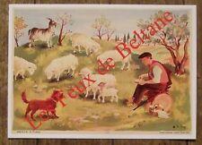 Carte postale Les moutons, Héléne Poirié, ,CPSM,