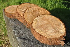 x10 TREE SLICE LARCH 20-25cm Craft Wood Log Blanks Wedding Display 3-5cm slices