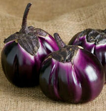 Heirloom 600 Seeds Purple Barbarella Eggplant Seed Asian Solanum Vegetable