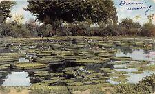 PHILADELPHIA PA HENRY DREER NURSERY WATER LILY POND SALES ORDER POSTCARD c1909