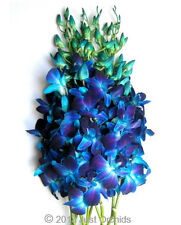 Fresh Flowers Delivery - Dyed Blue Bom Dendrobium Cut Orchids