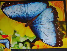 Mega Jigsaw Puzzle ~ Vibrant Series ~ Butterfly and Flowers