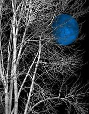 Black White Blue Moon Tree Wall Decor, Blue Bedroom Home Decor Wall Art Picture