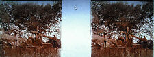 Photographie c1920 Chemin de croix des Espélugue femme essuie le visage de Jésus
