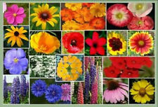 1 TBSP MIXED WILDFLOWER (30 Kinds!) Flower Seeds CombSH