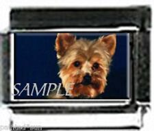YORKIE YORKSHIRE TERRIER #2 9mm Italian PHOTO charms for nomination bracelets