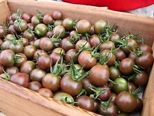 Chocolate Cherry Heirloom Tomato Seeds- 2016- 30+ Seeds      $1.69 Max Shipping