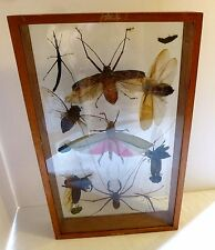 Vintage Taxidermy Insects INSECTS in Glass Display Case
