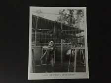 RARE VINTAGE CIRCUS ACT: Lilli Kristensen and Her Leopards Photo  - NO RESERVE