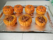MUNCHKIN PUMPKIN - WINTER SQUASH - MINIATURE PUMPKIN - 40 SEEDS