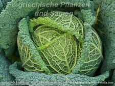 WIRSING Cavolo 100 Seme Verdura invernale ricco di vitamine antico tradizionale