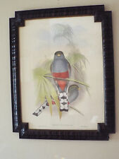 The Bombay Company Framed  J. Gould & H.C. Richter Print Trogon Bird