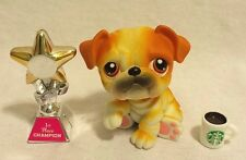 Littlest Pet Shop Bulldog #46 Puppy Dog Golden White Tan with a Starbucks Mug