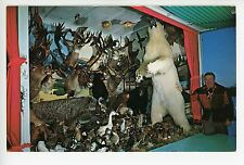 "Stuffed Polar Bear ""The Wild Life Ark"" Spring Valley Mn Vintage Taxidermy Animal"