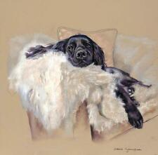 "COCKER SPANIEL BLACK FIELD DOG LIMITED EDITION PRINT ""Siesta"" Debbie Gillingham"