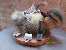 Taxidermy Duckling*Drunken Duckling*Genuine Taxidermy*UK