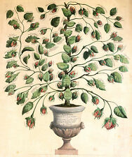 ABBRING 1815 Geslacht boom Prinsen van Oranje Nassau Willem I Nederland stamboom