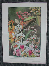 Schönblühende Orchideen Gewächshaus Orchidaceae FARBDRUCK von 1906