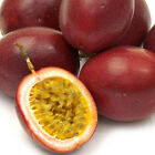 40PC Tropical Rare Exotic Passion Fruit Seeds Purple Passiflora Edulis Nutrition