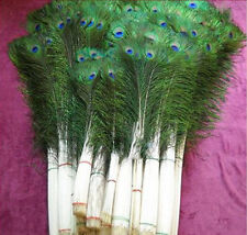10Pcs Natural Peacock Tail Feathers 10-12inch For Party Wedding Cloth DIY Decor