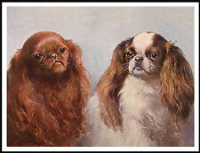 King Charles English Toy Spaniel Lovely Head Study Two Dogs Dog Print Poster