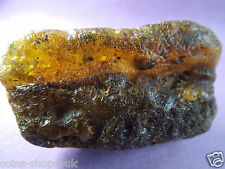 Large  Antique Baltic Genuine Amber Raw Stone  琥珀色 Natur Bernstein  23.5 gram