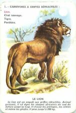 LION Löwe  PANTHERA LEO AFRICAN AFRIQUE PLAYING CARD CARTE A JOUER OLD ANCIEN