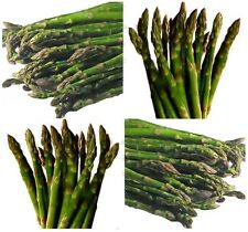(100) MARY WASHINGTON Asparagus seeds - - Combined S&H