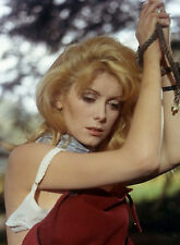 PHOTO CATHERINE DENEUVE - 11X15 CM  # 3