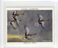 (JD1965-100)  PLAYERS,WILDFOWL,GREYLAG GOOSE,1937,#9