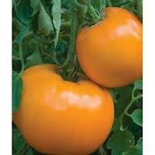 TOMATO, JUBILEE TOMATO SEED, ORGANIC, NON- GMO, 25 SEEDS PER PACKAGE