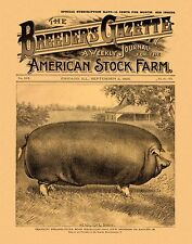 Hog Pig Antique Farming Poster 11x14  Art Advertising Swine Boar Supplies MAG53