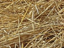 85 g - paja de cebada antialgas para Acuario anti algas peroxido