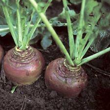Swede Invitation - Appx 1000 seeds - Vegetables/Fruits