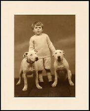 ENGLISH BULL TERRIER SMALL BOY AND DOGS LOVELY DOG PRINT MOUNTED READY TO FRAME