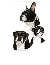 BOSTON TERRIER MultiDogs Pose in Twelve x 6 inch Fabric Squaresl to Quilt-Sew