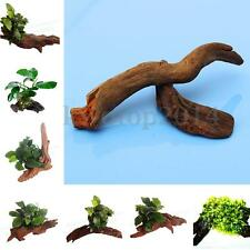 New Small Nature Driftwood Wood Shrimp Fish Tank Aquarium Decoration Plants Tied