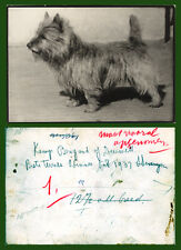 CAIRN TERRIER NAMED DOG VINTAGE B&W PHOTO dated1937 - possibly Dutch or German
