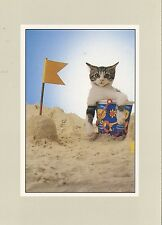 POSTCARD / CARTE POSTALE ILLUSTRATEUR / PAUL REES / TONY STONE / / CAT / CHAT