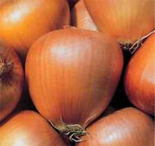 TUSCAN EGG ONION - MORE TASTE, LESS WASTE GOOD KEEPER GOOD FLAVOUR 100 SEEDS