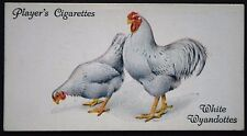 White Wyandotte  Chickens     Superb 1930's Vintage Card ## VGC